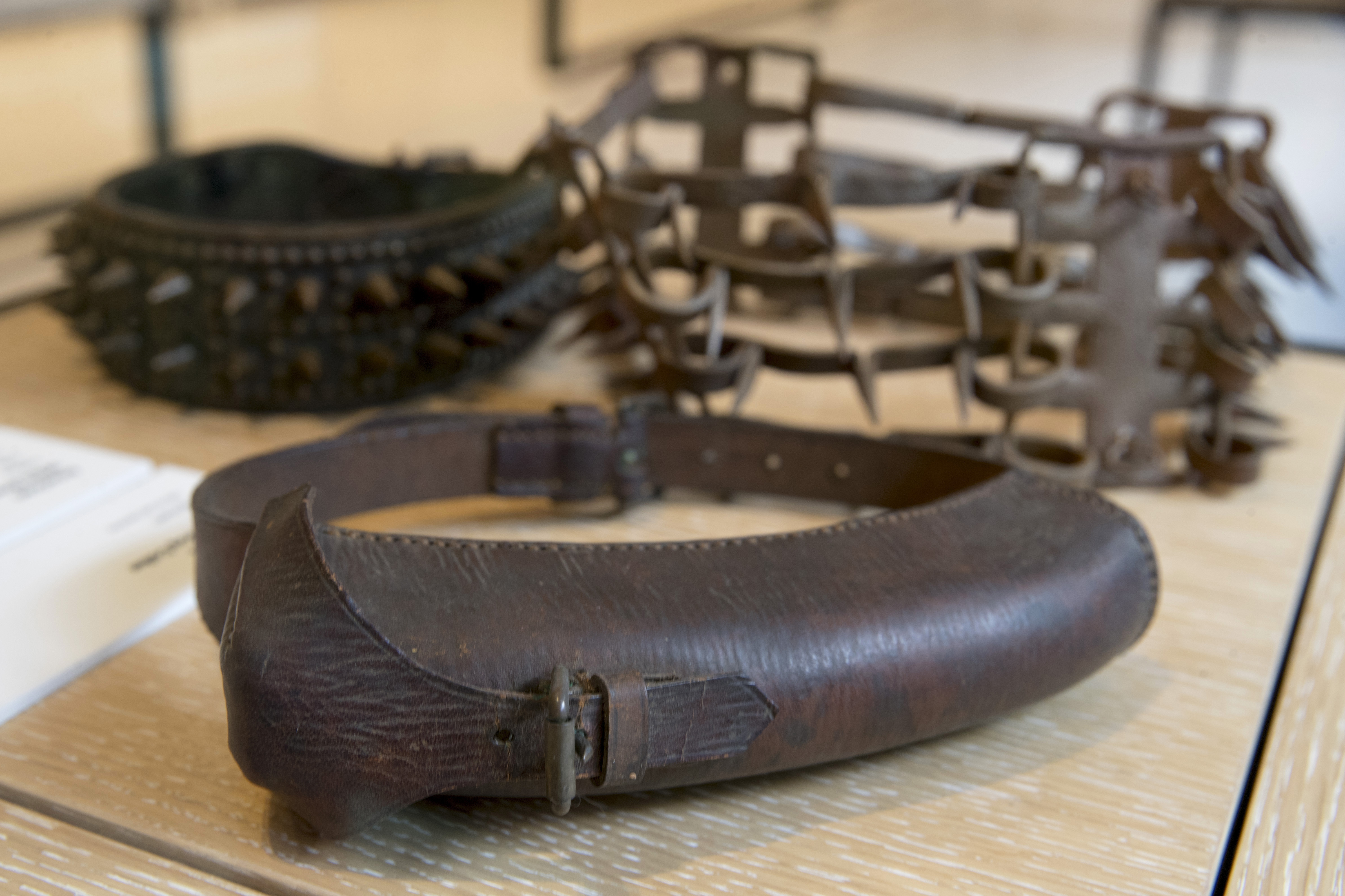 An American World War II messenger collar is on display next to other spike collars at the American Kennel Club Museum of the Dog.