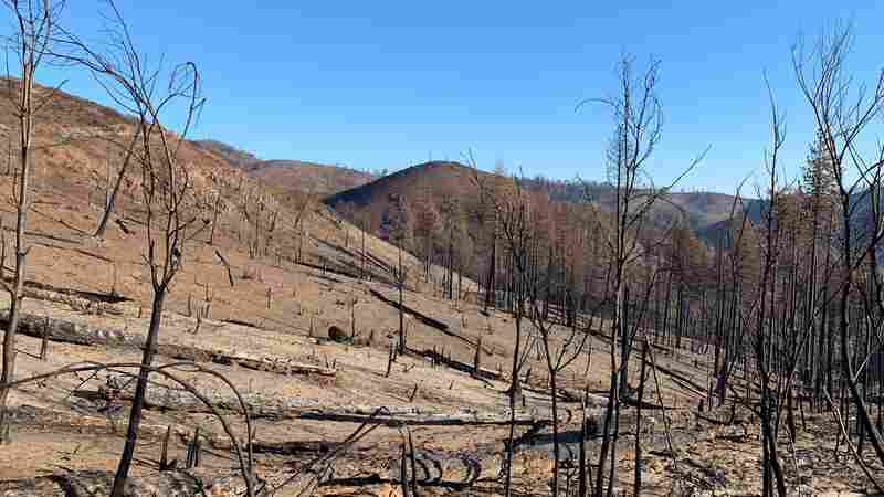 Residents Of Paradise And Other Towns Destroyed By Wildfire Must Wait To Go Home