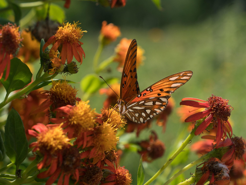 Butterflies V. Border Wall: National Butterfly Center Seeks Restraining Order