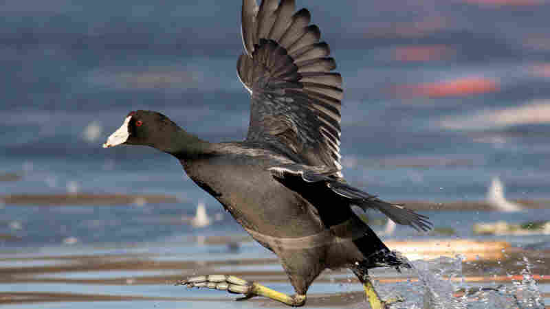 Talkin' Birds: The Great Backyard Bird Count