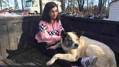Family Reunites With Dog That Disappeared During The Deadly Camp Fire