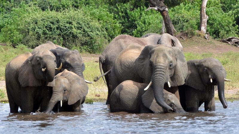Botswana Weighs Lifting Hunting Ban, With Eye On Reducing