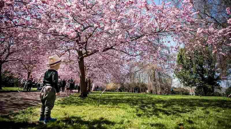 Greener Childhood Associated With Happier Adulthood