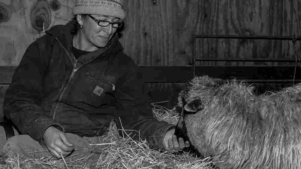 After Combat, A Veteran Finds Solace In Sheep Farming