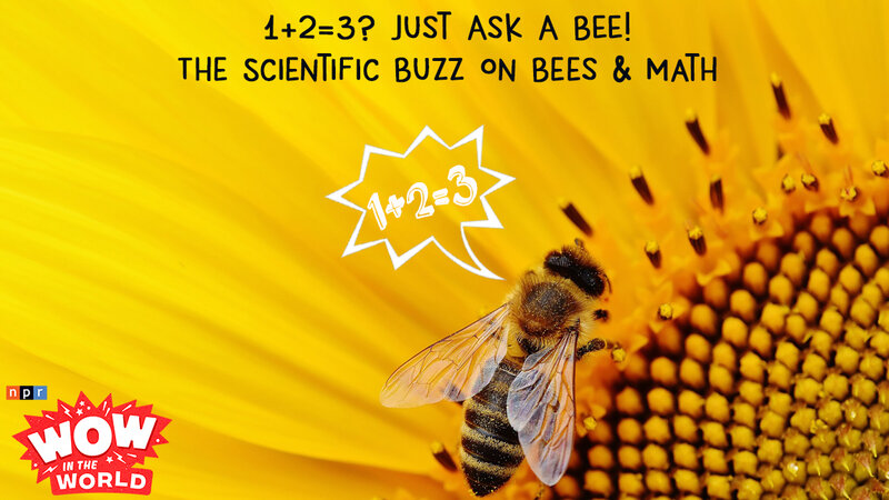 1+2=3? Just Ask A BEE! - The Scientific Buzz On Bees & Math : NPR