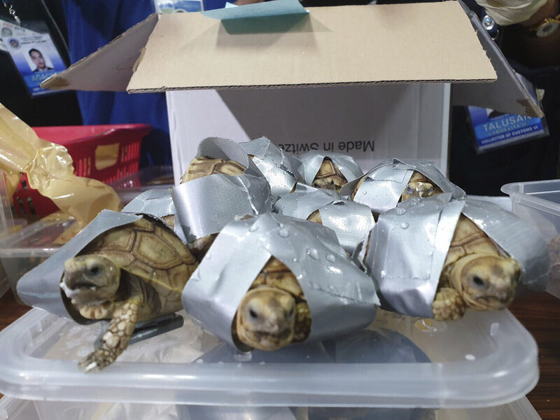 More Than 1,500 Smuggled Turtles And Tortoises Found At