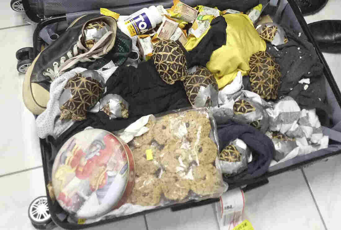 More than 1,500 exotic turtles and tortoises abandoned by suspected smuggler at Manila airport