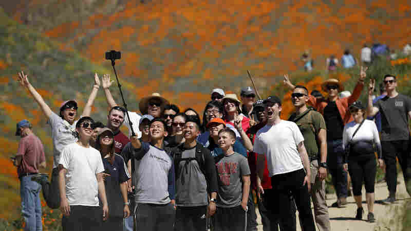 'Poppy Apocalypse': A California City Swarmed By Selfie Stick-Toting Tourists