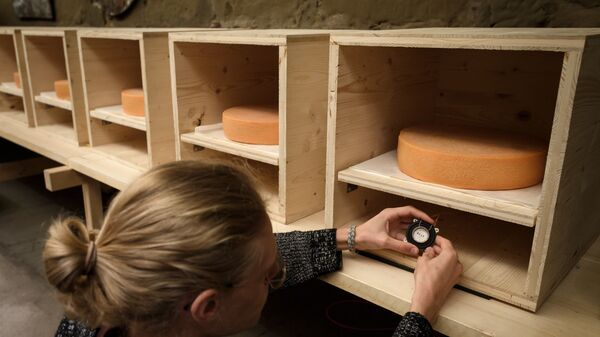 University of the Arts in Bern student, Simon Walker, checks a small music speaker placed directly bellow a wheel of Emmental.