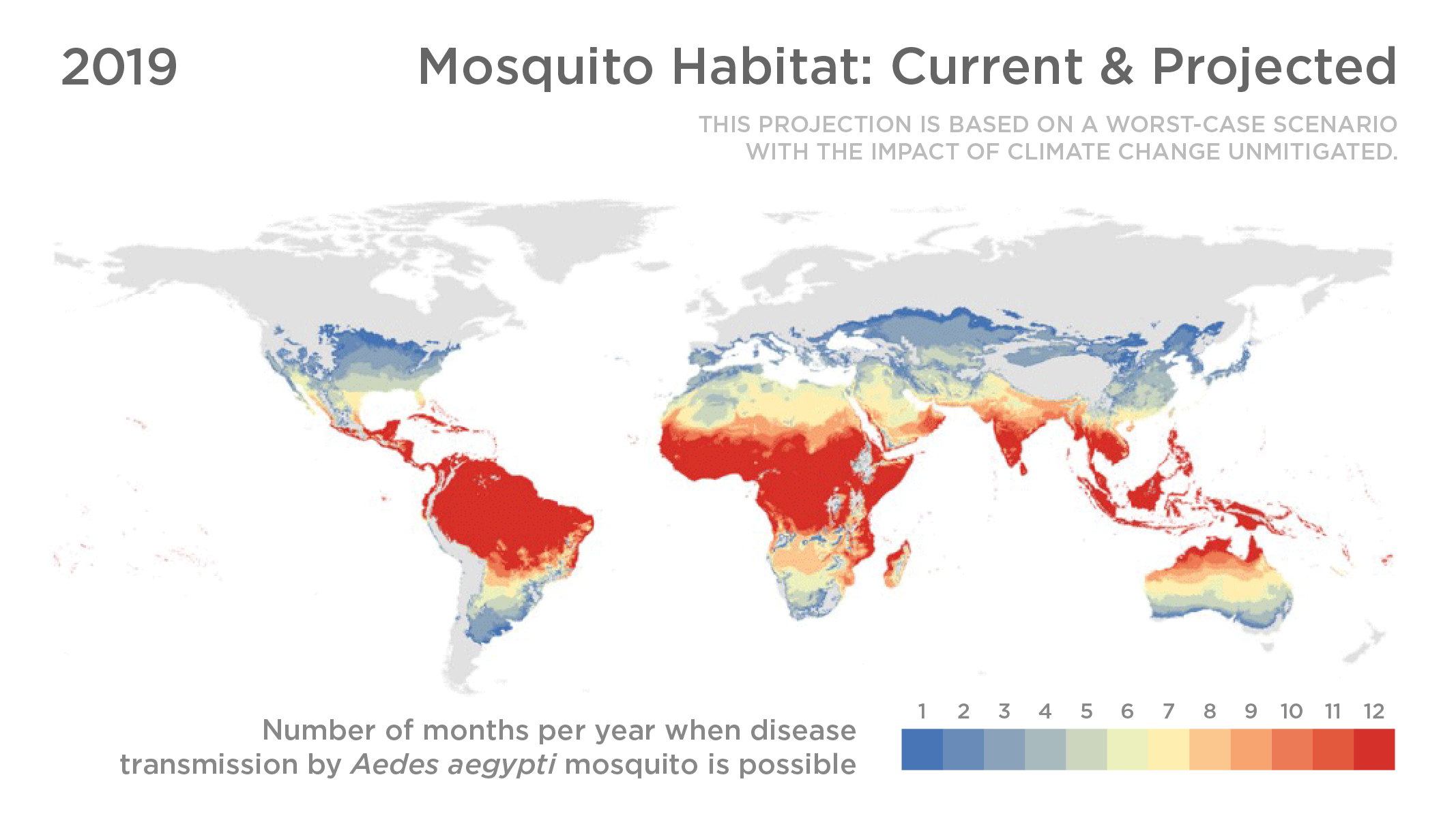 World map showing current and projected habitats of the Aedes aegypti mosquito.