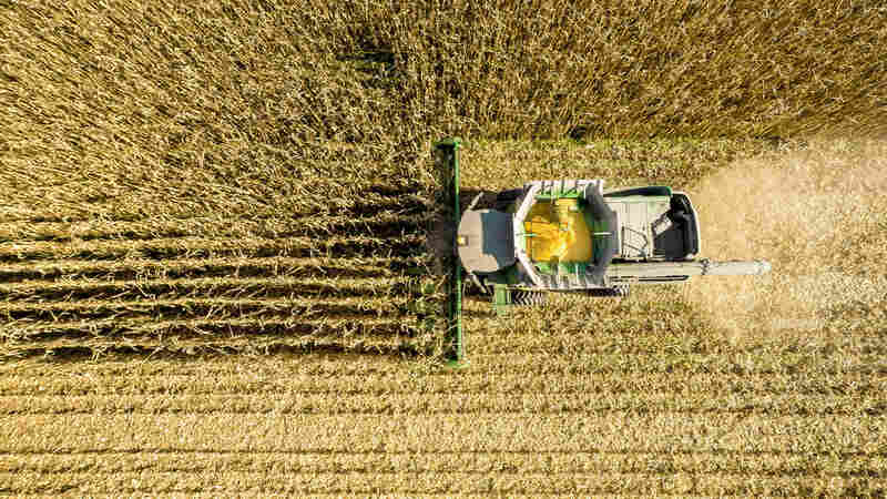 Growing Corn Is A Major Contributor To Air Pollution, Study Finds