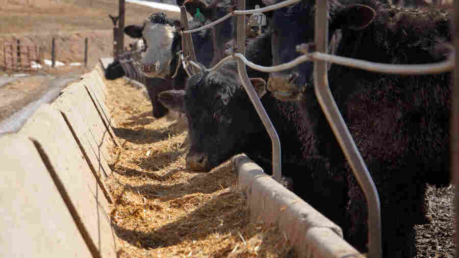 Some In The Beef Industry Are Bucking The Widespread Use Of Antibiotics. Here's How