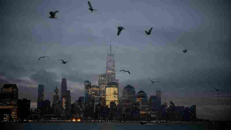 Big Cities, Bright Lights And Up To 1 Billion Bird Collisions
