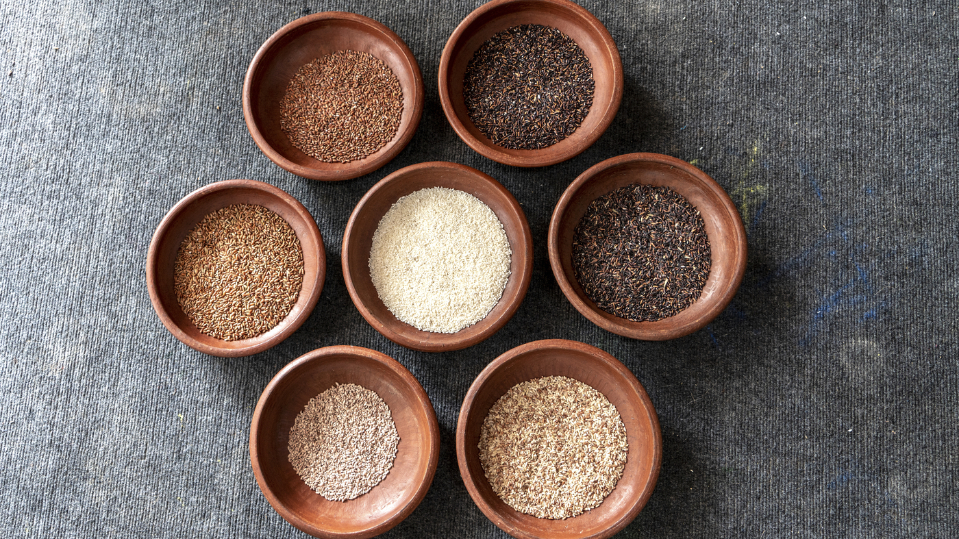 lowest price d335e c011f Edible Archives Project Aims To Revive Hundreds Of Vanishing Indian Rice  Strains