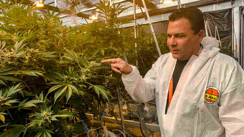 Bags Of Cash, Armed Guards And Wary Banks: The Edgy Life Of A Cannabis Company CFO
