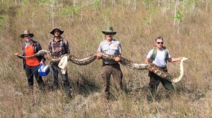 17-Foot Python In Florida Breaks Record, Park Officials Say