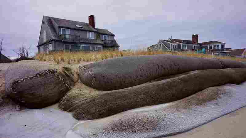 As Dunes Disappear, Fiber Rolls Protect Cape Cod Homes From Coastal Erosion