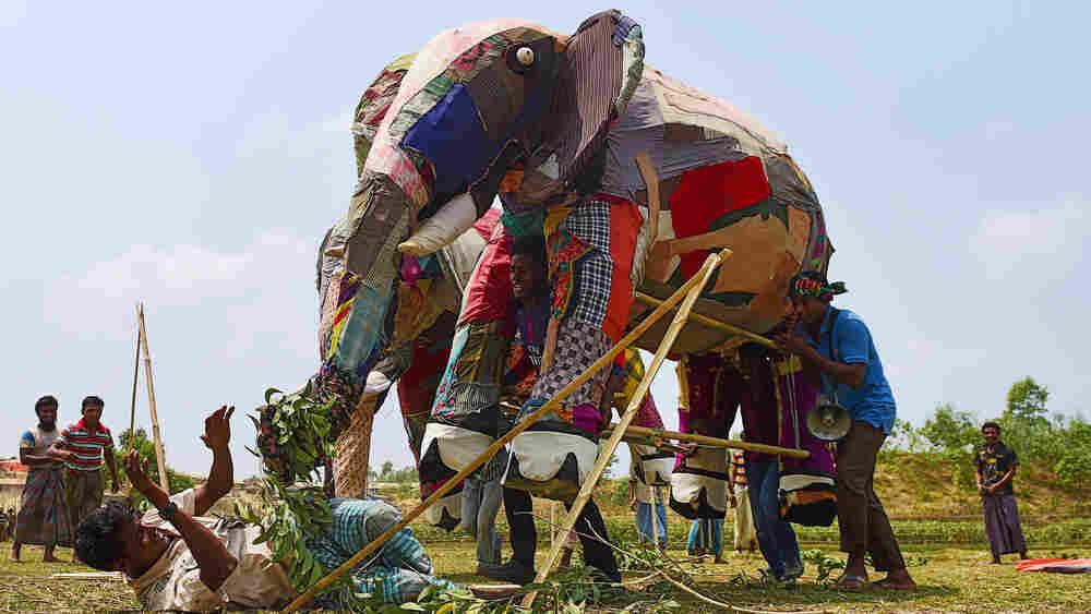Why Elephants Pose A Threat To Rohingya Refugees