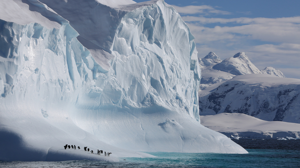 Gentoo penguins sit on an Antarctic iceberg in a scene from the new Netflix nature documentary series Our Planet.
