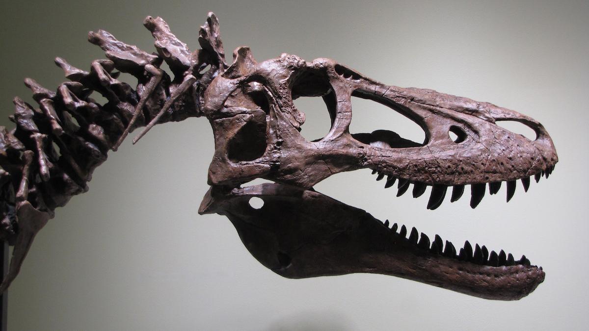 Selling A T-Rex On eBay