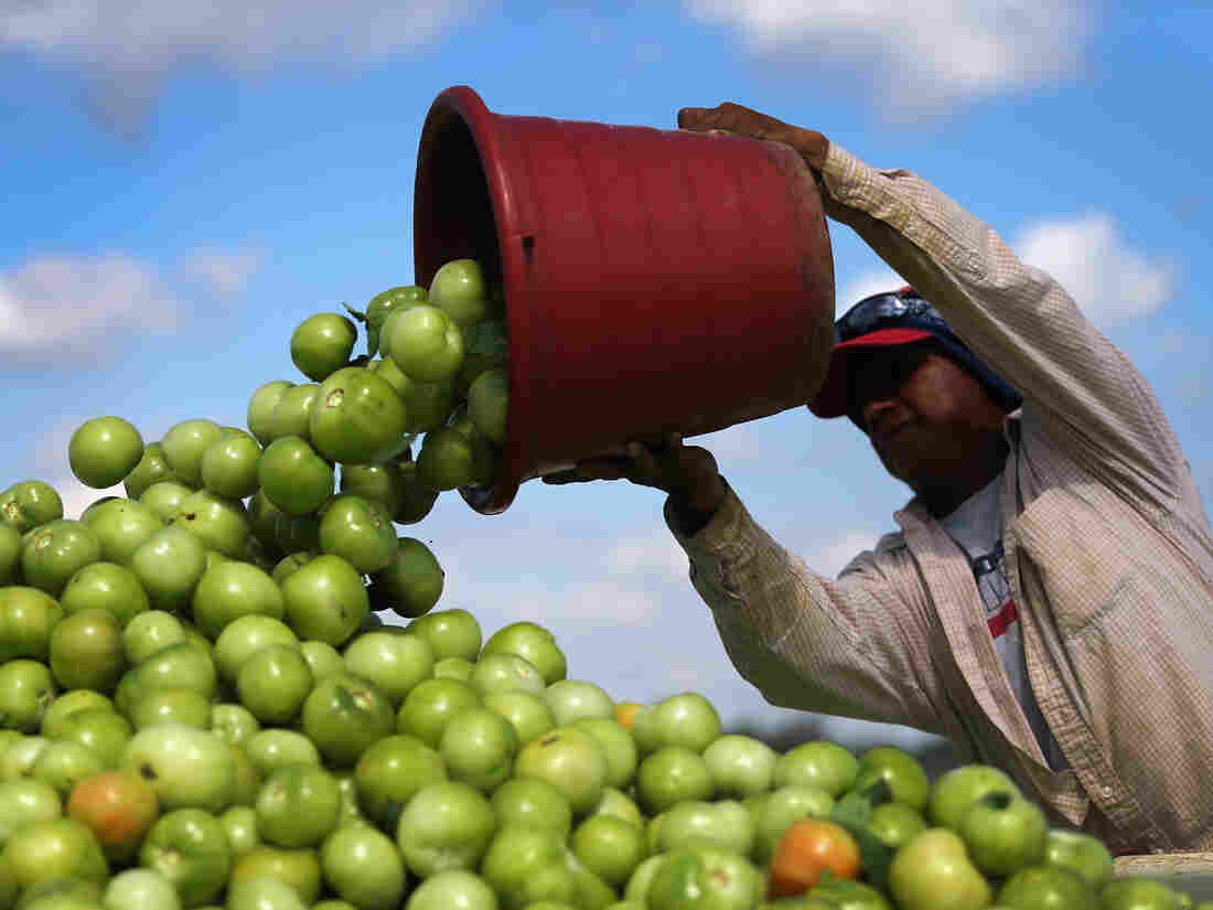 US to levy tariff on imported Mexican tomatoes in trade spat