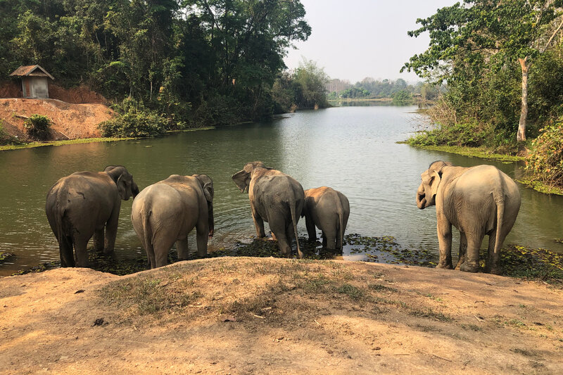 Challenges Facing Laos' Wildlife including Iconic Tigers and Elephants (NPR)