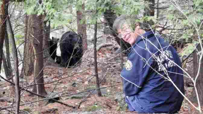 After Walking Thousands Of Miles, Mink The Bear Is Almost Back Home