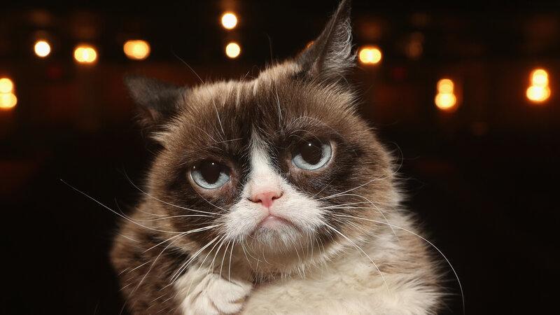 Ok google show me a picture of grumpy cat