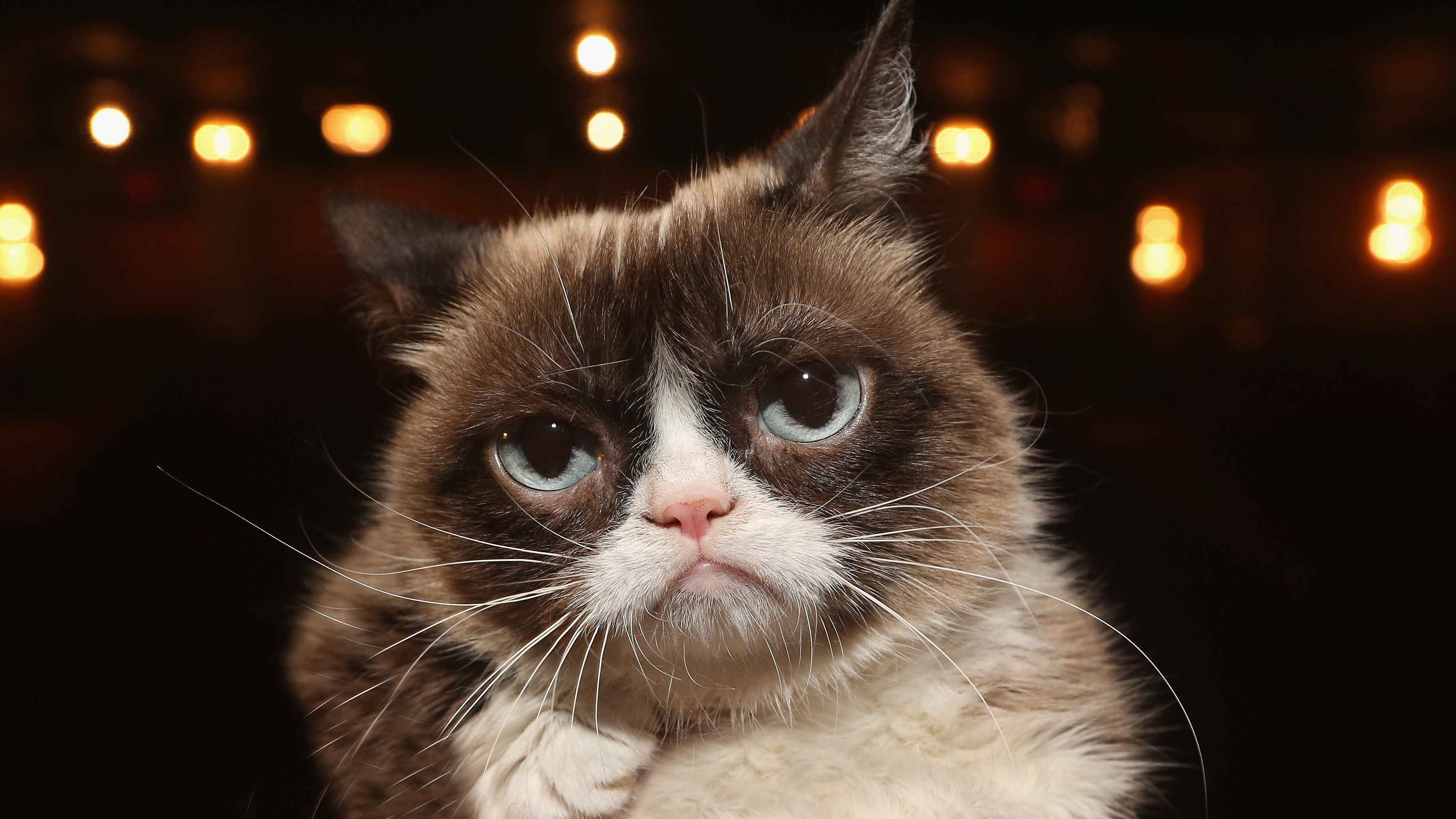 Grumpy Cat Dies; Her Spirit Will Live On, Family Says