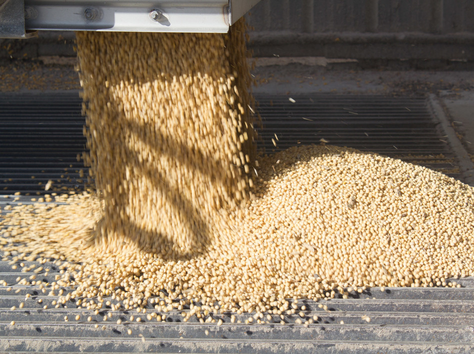 Farmers have produced record or near-record soybean crops in recent years. (Amy Mayer/Harvest Public Media)