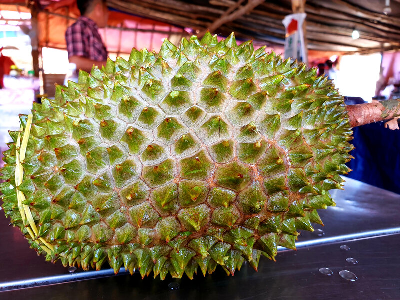 Stinking Rich? Malaysia Aims To Cash In On China's Durian