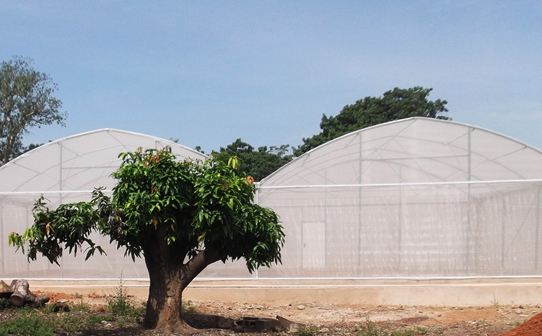 """The scientists erected a """"MosquitoSphere"""" in Burkina Faso to test the genetically modified fungus in something close to a natural setting. The structure resembles a large greenhouse, with walls made of mosquito netting. Inside are six compartments, including four designed to resemble typical huts in the region."""