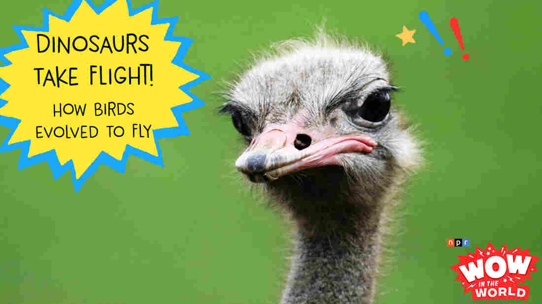 What in the world can a giant ostrich and a prehistoric dinosaur tell us about the evolution of flight? Join Mindy, Guy Raz, a dino robot, and escaped zoo ostrich as they explore the Who, What, When, Where, Why, How, and Wow in the World of FLIGHT!