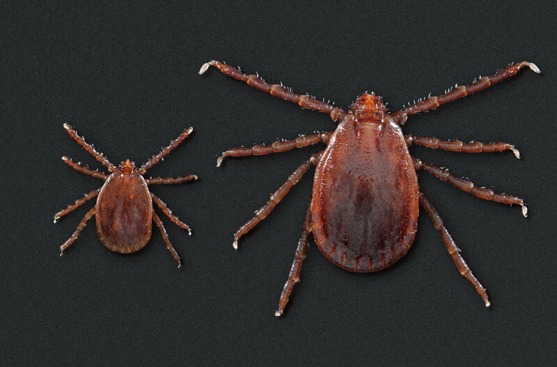 New Tick-Borne Disease In Inner Mongolia Found By Chinese