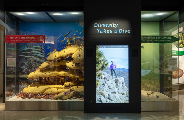 A portion of the Deep Time exhibit is dedicated to the mass extinction called the Great Dying. More than 90% of species in the oceans died out, as did two-thirds of those on land.