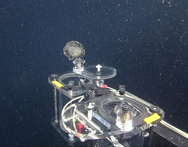 The Ventana is traveling up to 3,000 feet deep into the Monterey Bay in California, taking samples from sea creatures like larvaceans.