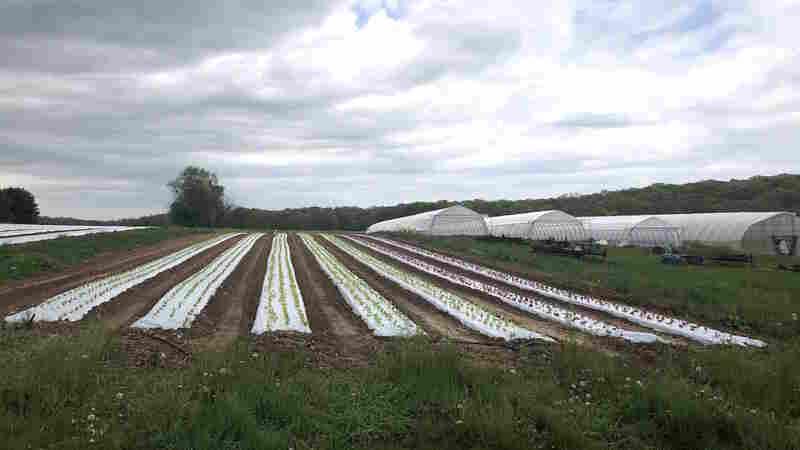 Organic Farming Has A Plastic Problem. One Solution Is Controversial