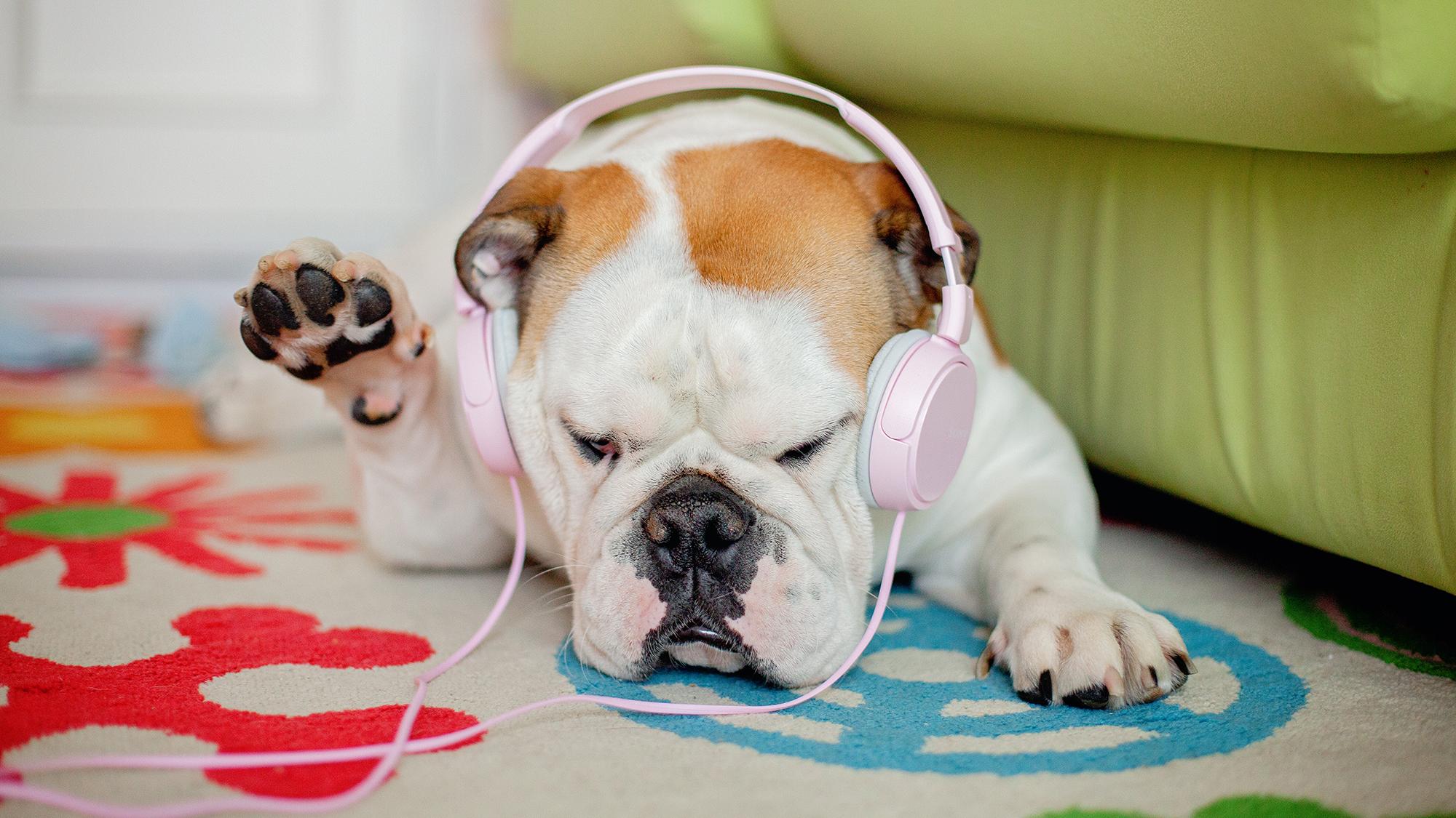 Introducing NPR Music Playlists