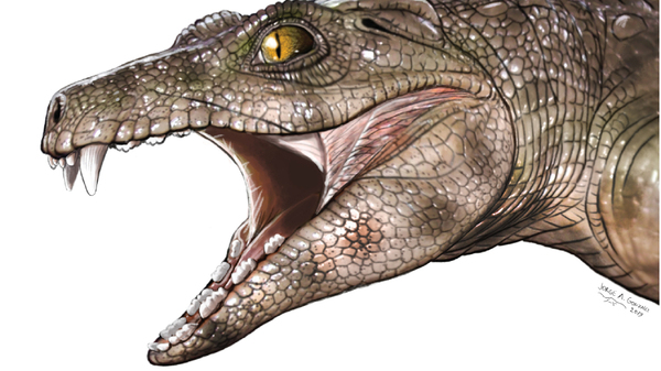 An artist has reconstructed what ancient crocodile ancestors looked like, including some that very likely ate plants.