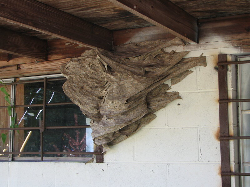Alabama May See A Large Number Of Yellow Jacket Super Nests This
