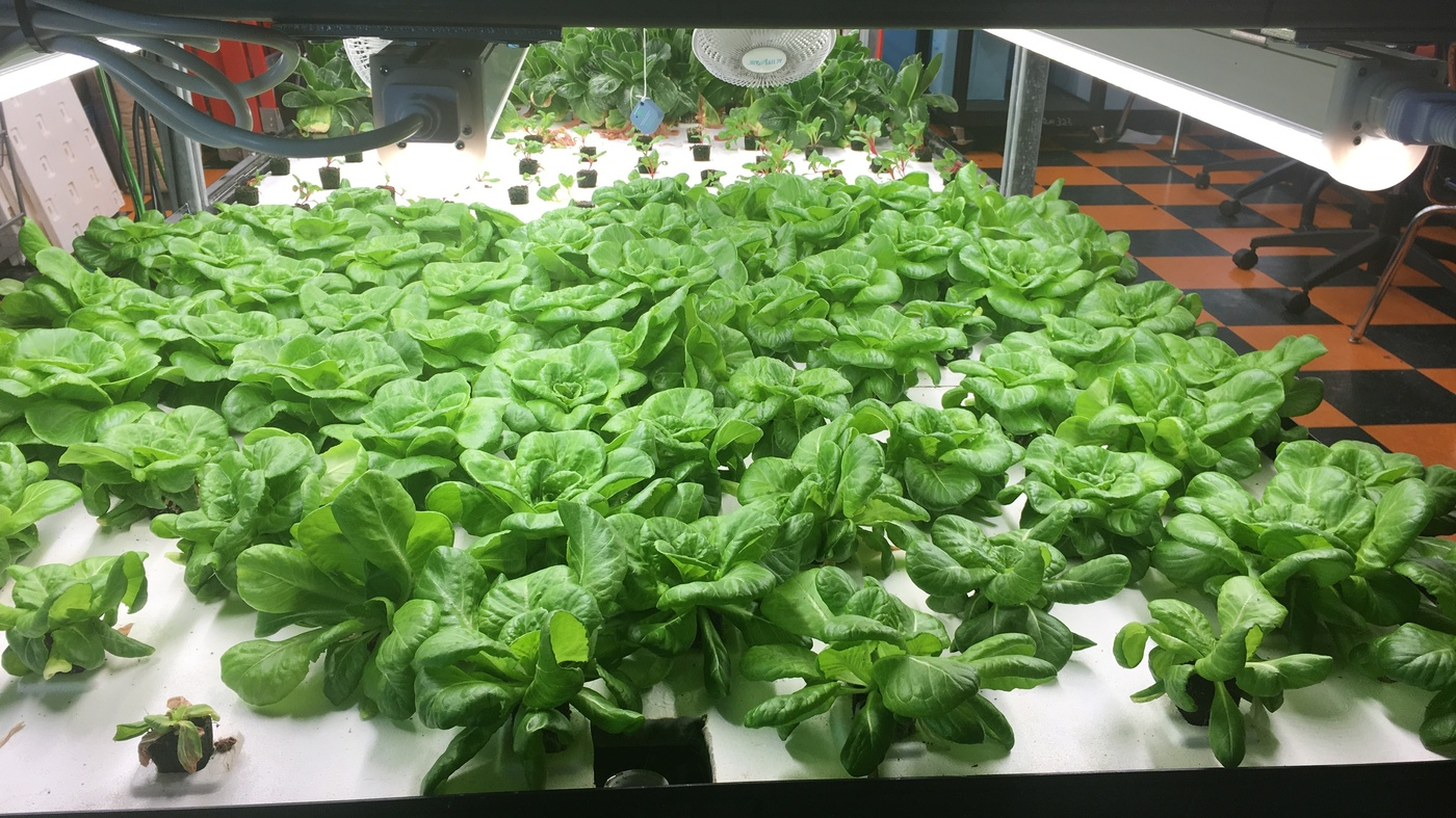 How Hydroponic School Gardens Can Cultivate Food Justice Year