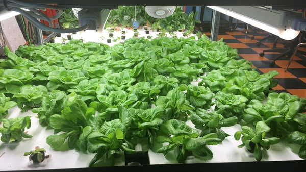 How Hydroponic School Gardens Can Cultivate Food Justice, Year-Round