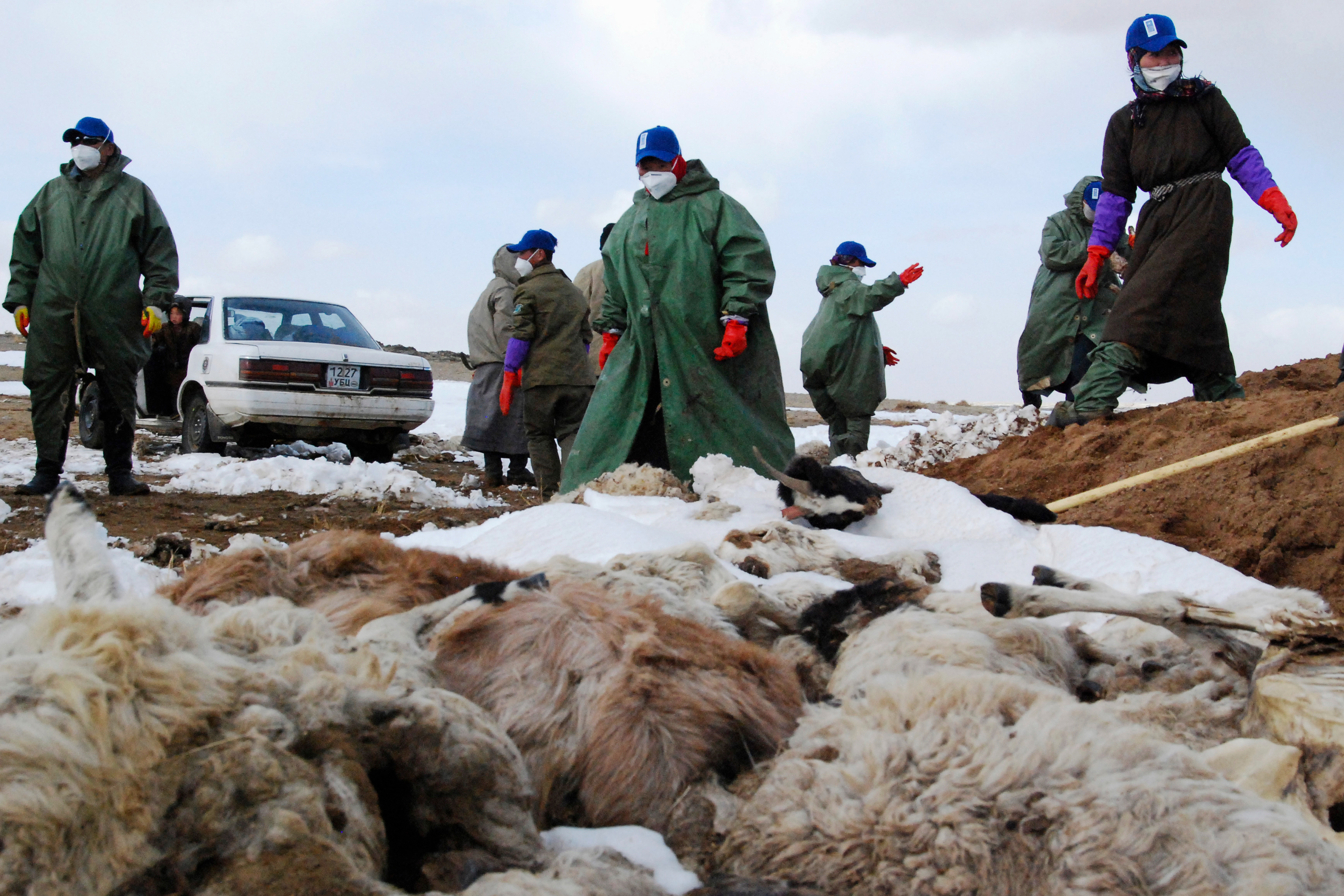 The Deadly Winters That Have Transformed Life For Herders In Mongolia