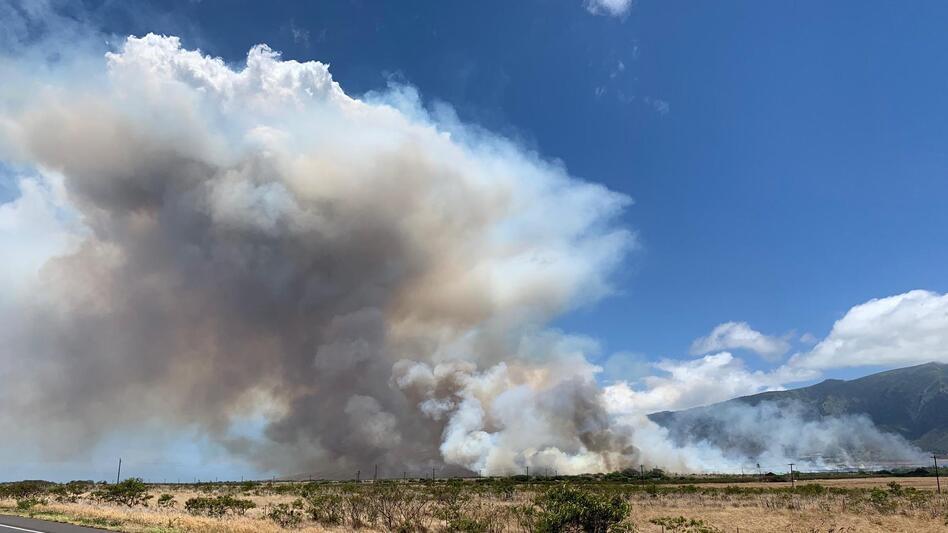 maui fire - photo #26