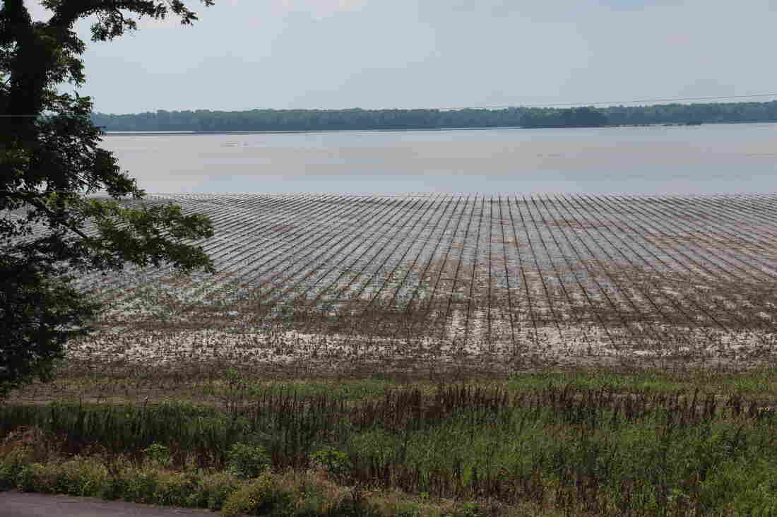 Water is finally receding from Robert Henry's fields near New Madrid, Mo. But for most of this land, it's too late to plant crops.