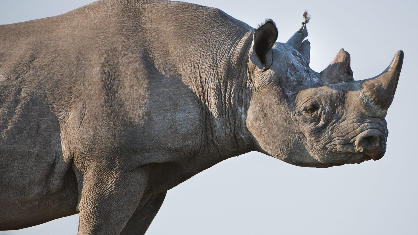 Rhino Bonds