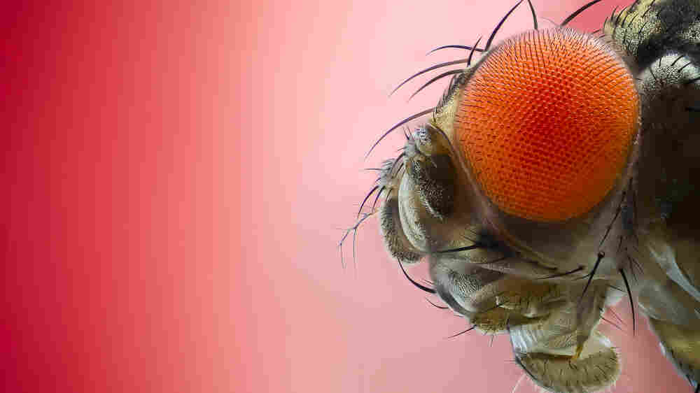 Bugged By Insects? 'Buzz, Sting, Bite' Makes The Case For 6-Legged Friends