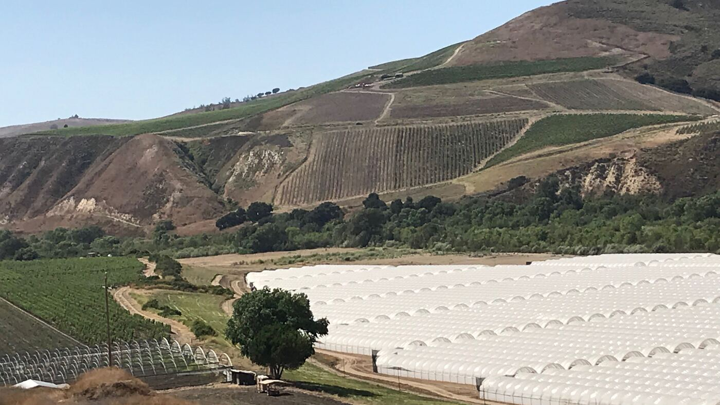 California's Largest Legal Weed Farms Face Conflict In Wine