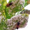 Jauni pierādījumi liecina, ka parastie pesticīdi var netīši kaitēt kukaiņiem