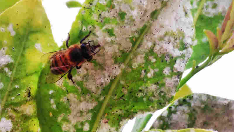 New Evidence Shows Popular Pesticides Could Cause Unintended Harm To Insects